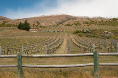 Vineyard with view on mountain range. Royalty Free Stock Images