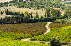 Vineyard Stock Photos