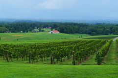 Vineyard with a view on the valley Royalty Free Stock Photos
