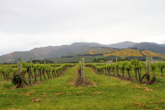 Vineyard views Royalty Free Stock Images
