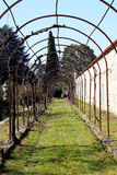 Vineyard in Villa Manin Stock Image