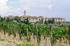 Vineyard - Villa a Sesta stock photos