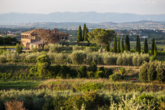 Vineyard villa in Tuscany Italy. A vineyard villa in Tuscany Italy with cypress trees driveway royalty free stock images