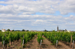 Vineyard and village Stock Photography