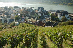 Vineyard with a Village in the Background. Assmanshausen Germany royalty free stock image