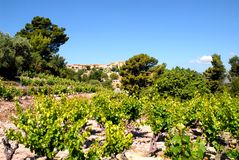 Vineyard and village of Castellet Royalty Free Stock Image