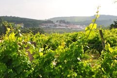 Vineyard with village Obidos Lisbon Portugal stock photo