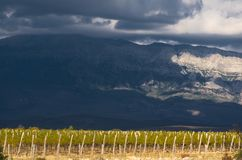 Wineyars under a mountain Dinara. Vineyard in village Vrbnik, with mountain Dinara in background, near city of Knin Royalty Free Stock Photography