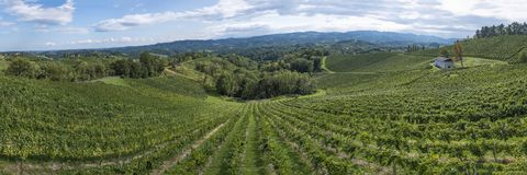 Vineyard on the vine route in south Styria in Austria Stock Image