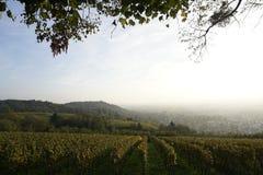 Vineyard. Vinyard in bbeautiful autumn light royalty free stock photography