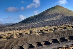 Vineyard on volcano Stock Photo