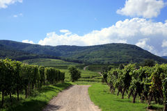 Vineyard and Vosges Mountain in France Royalty Free Stock Photography