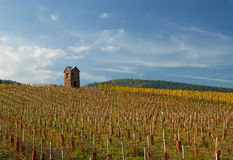 Vineyard Watchtower Stock Images