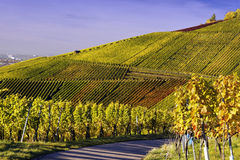Vineyard and a way Royalty Free Stock Images