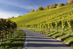 Vineyard and a way Royalty Free Stock Photo
