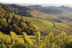 Vineyard and a way Stock Image