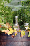 Vineyard with white wine Stock Image