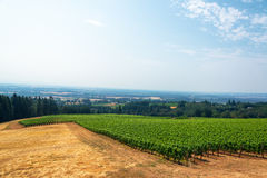 Vineyard and Willamette Valley Royalty Free Stock Images
