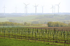 Vineyard with wind turbines Royalty Free Stock Photography