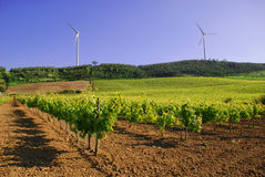 Vineyard and windmill Royalty Free Stock Photos