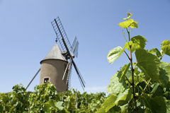 Vineyard, with windmill from Beaujolais. Stock Photo