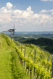 Vineyard with windmill called klapotetz in south of Styria, Austria. Wine, slovenia, nature, heart, green, summer, white, landscape, weinstrasse, tourism royalty free stock photo