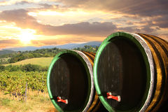 Vineyard with wine barells in Chianti, Tuscany. Vine barrels against wine landscape in Tuscany, Italy stock photos