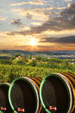 Vineyard with wine barells in Chianti, Tuscany. Vine barrels against wine landscape in Tuscany, Italy stock image
