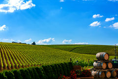 Vineyard. With wine barrels in Recas, Romania Royalty Free Stock Photography