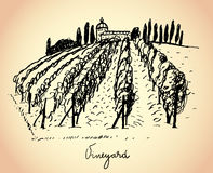 Vineyard. Wine & Grape illustration. Stock Image