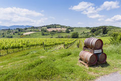 Vineyard and wine tasting area in Tuscany Royalty Free Stock Photo