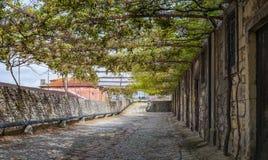 Vineyard winery city terrace roof cellar entry Porto Stock Photos
