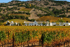 Vineyard and Winery, Sonoma. Cape Dutch architecture at a winery in the Sonoma district of California wine trail. Autumn Fall colors on the vines Royalty Free Stock Photos