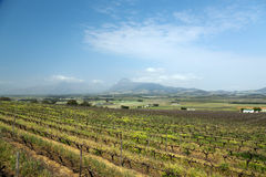 Vineyard or winery in South Africa Royalty Free Stock Image