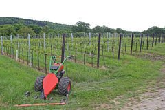 Vineyard. Wineyard in germany in late spring royalty free stock images