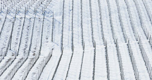 Vineyard in winter. Landscape imagine of a vineyard totally covered by the snow in winter Stock Photography