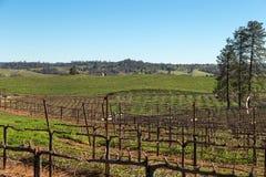 Vineyard during Winter Stock Image