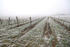 Vineyard at winter. Royalty Free Stock Photos
