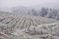 Vineyard in winter. Vineyard duringwinter on hills in region Slavonija in Croatia Royalty Free Stock Photo