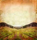 Vineyard in Winter on a Grunge Background