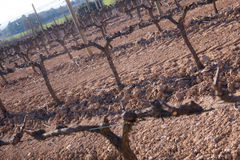 Vineyard winter landscape Stock Photos