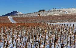 Vineyard in winter Royalty Free Stock Images