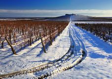 Vineyard in winter Royalty Free Stock Photo