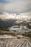 Vineyard during winter. Mountainous vineyard during winter and a wind farm at the distant stock image