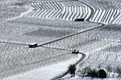 Vineyard in winter no.3 Stock Photos