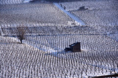 Vineyard in winter stock photos