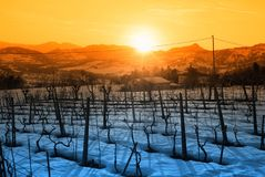 Vineyard With Snow Royalty Free Stock Image