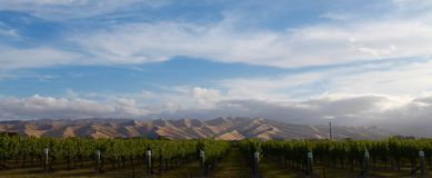 VINEYARD AND WITHER HILLS WIDE SHOT, MARLBOROUGH WINE COUNTRY, NEW ZEALAND. A SAUVIGNON BLANC vineyard set before the stunning Wither Hills in New Zealand`s Stock Image