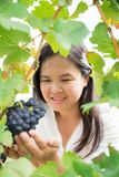 Vineyard worker checking wine grapes in vineyard. Vineyard woman worker checking wine grapes in vineyard. Winery, winemaker and worker concept. Sunny day in Royalty Free Stock Images