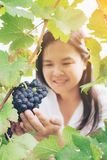Vineyard worker checking wine grapes in vineyard. Vineyard woman worker checking wine grapes in vineyard. Winery, winemaker and worker concept. Sunny day in Stock Photo